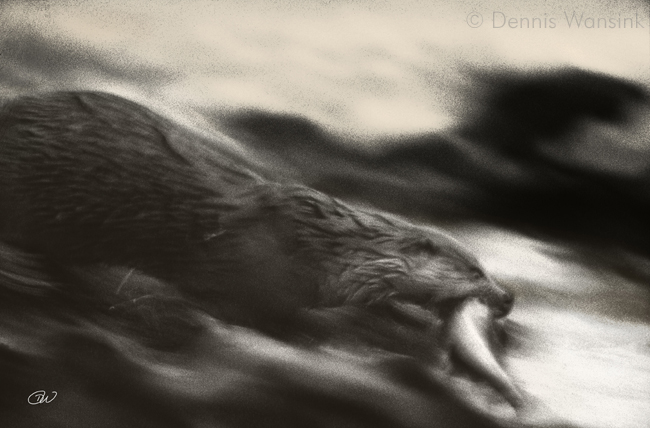 Otter, Shetland